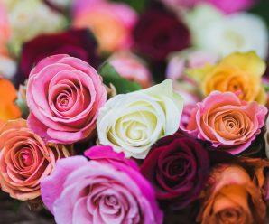 Rosor i flera färger